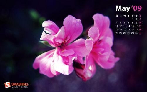 pink-flower-r100